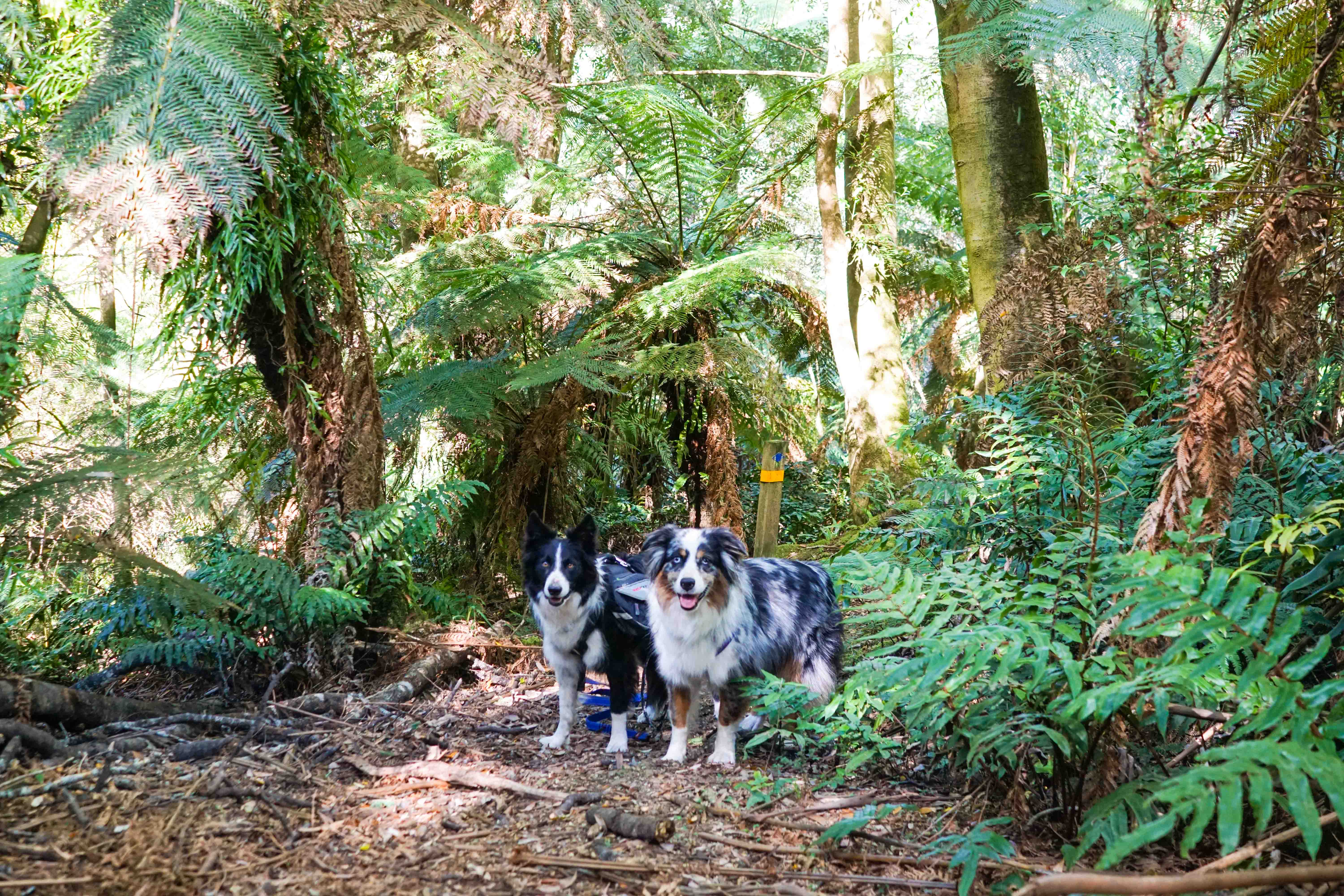 Dog Friendly Hikes Melbourne